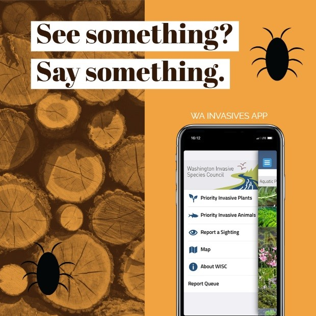 See something? Say something. Image of app on phone
